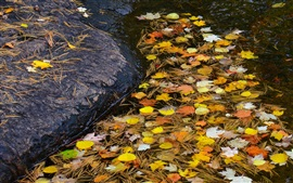 Stream, stone, water, leaves, autumn