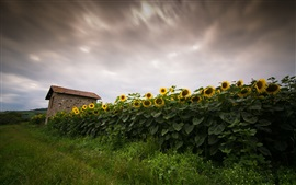 Preview wallpaper Sunflowers field, house, dusk