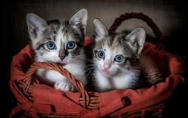 Preview wallpaper Two cute kittens, basket
