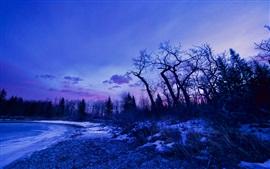 Inverno, amanhecer, brilho, árvores, neve, lago
