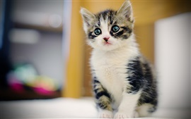 Preview wallpaper Cute furry kitten, face, eyes, blur background