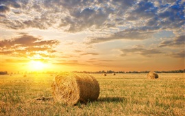 Campo de exploração agrícola, grama, feno, por do sol, nuvens