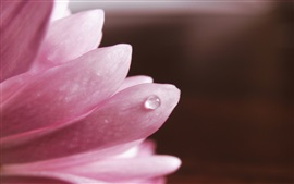Preview wallpaper Flower macro, pink petals, dew