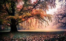 Golden autumn, nature, trees, leaves, fog, dawn