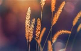 壁紙のプレビュー 草、自然、ボケ味