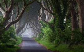 Preview wallpaper Ireland, road, trees, channel, morning, mist