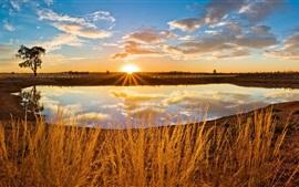 Lago, pôr do sol, nuvens, árvore, grama