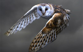 Preview wallpaper Owl flying, barn owl, wings