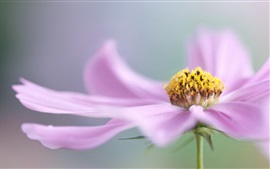Preview wallpaper Pink flower macro photography, petals