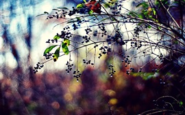 Plants, berries, leaves, water drops, blurring, twigs
