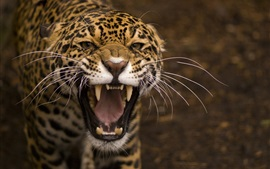 Preview wallpaper Predator, jaguar, wild cat, face, mouth, teeth