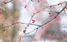 Красные ягоды, холод, зима, веточки