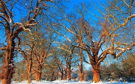 Preview wallpaper Snow, winter, trees, branches