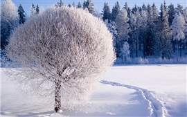 Preview wallpaper Winter, forest, trees, thick snow, white world
