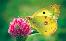 Preview wallpaper Yellow butterfly, pink flower