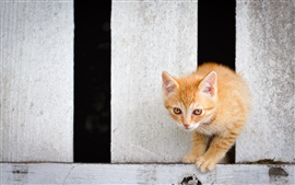 Preview wallpaper Yellow eyes kitten, through the fence