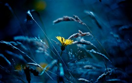 flor, grama, estilo azul amarelo