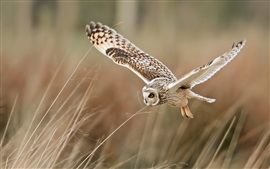 Preview wallpaper Bird close-up, owl flying, grass
