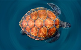 Preview wallpaper Canary Islands Turtle