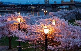 City, night, spring, trees, flowers, river, lamps
