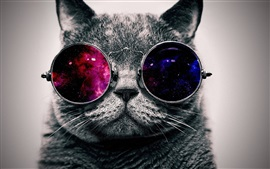 Preview wallpaper Cute cat with sunglass, very cool