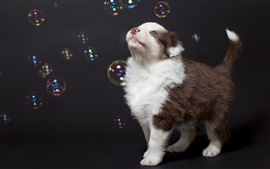 Preview wallpaper Dog look at bubbles