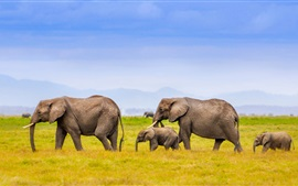 Preview wallpaper Elephants family, Africa, grass, blue sky