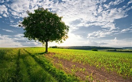 Árbol solo en los campos