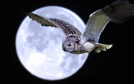 Owl flight under moon
