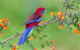 Preview wallpaper Red blue feathers bird, parrot, flowers, twigs