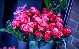 Красные розы, ведра, букет, стена