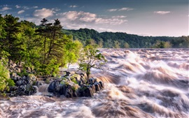 Río, corriente, árboles, piedras