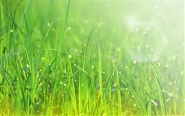 Preview wallpaper Summer, green grass, after rain, water drops