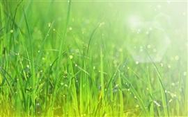 Verano, hierba verde, después de la lluvia, gotas de agua