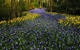 Preview wallpaper The Netherlands, Keukenhof Park, hyacinths flowers, tulips, trees