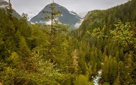 USA, Washington, Marblemount, forest, mountains, stream