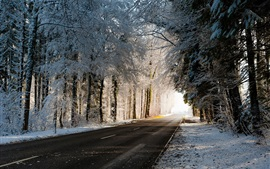 Winter, road, trees, snow