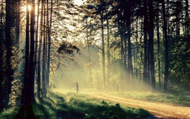 Preview wallpaper Beautiful nature, morning, trees, sun rays, road