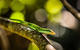 Preview wallpaper Green lizard, tree branch, bokeh