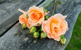 Orange rose fleurs