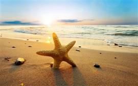 夕日のビーチでヒトデ、海、日