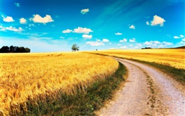 Preview wallpaper Yellow wheat fields, road, blue sky, clouds