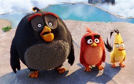 Preview wallpaper Angry Birds, 2016 movie HD