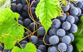 Preview wallpaper Black grapes, green leaves, fruits close-up