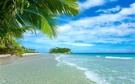 Голубое небо и море, пляж, побережье, пальмы, тропические, вода