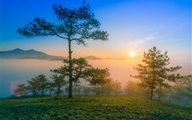 Preview wallpaper Dawn nature scenery, morning, mountains, pine trees, fog, sunrise