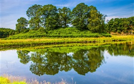 Preview wallpaper England nature scenery, trees, grass, lake, water reflection