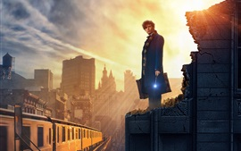 Preview wallpaper Fantastic Beasts and Where to Find Them 2016