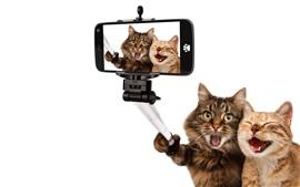 animais engraçados, selfies gato, feliz