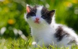 Пушистый котенок, белый черный